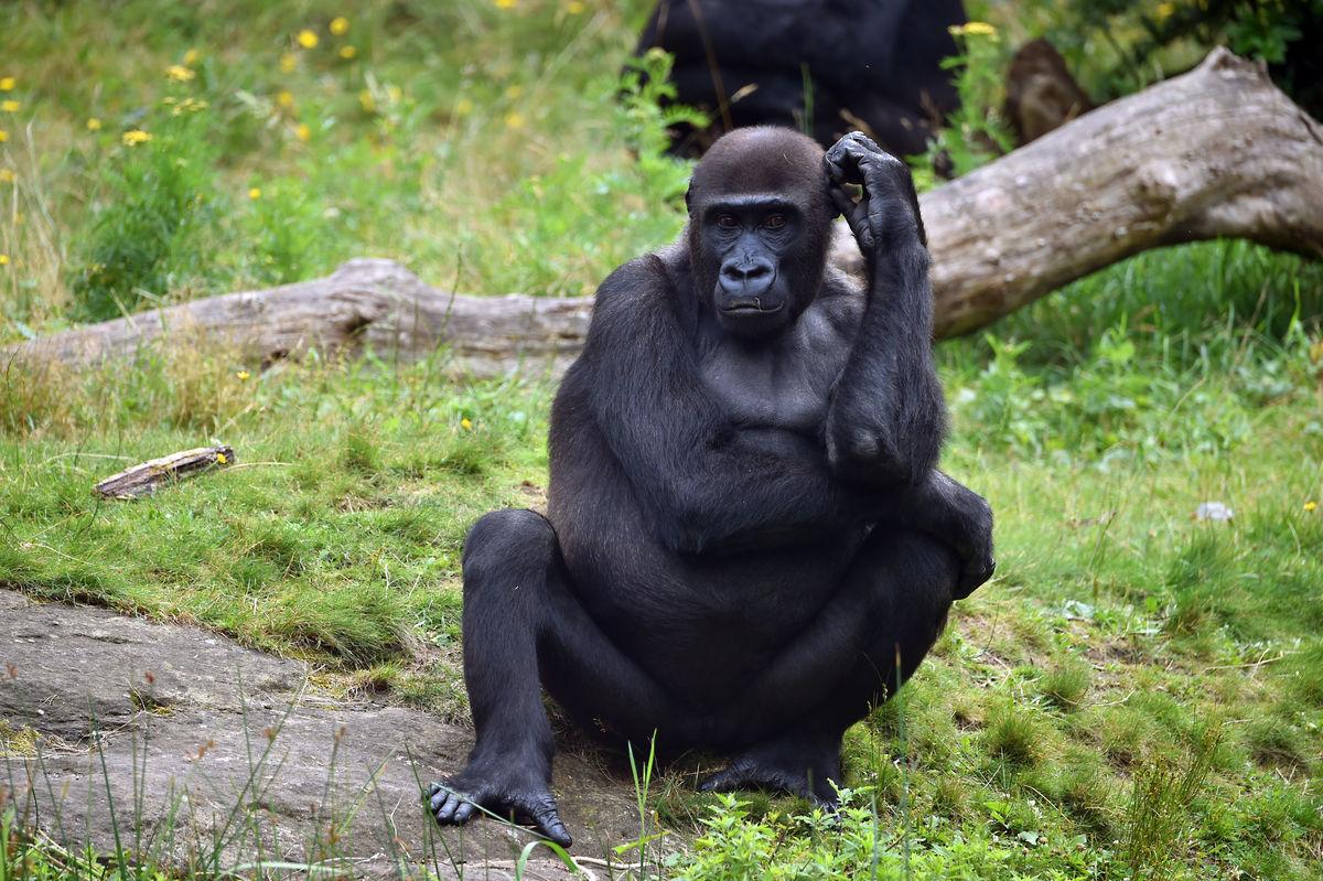 大黑鸡吧愺`/:)�h�_黑猩猩