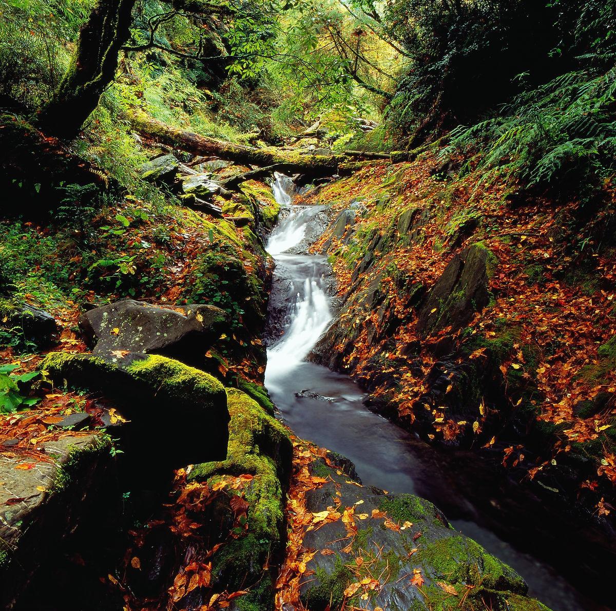 台湾,中横,溪流,小溪,枫叶,枫树,山林,树林,红叶,风景,景色,景观图片
