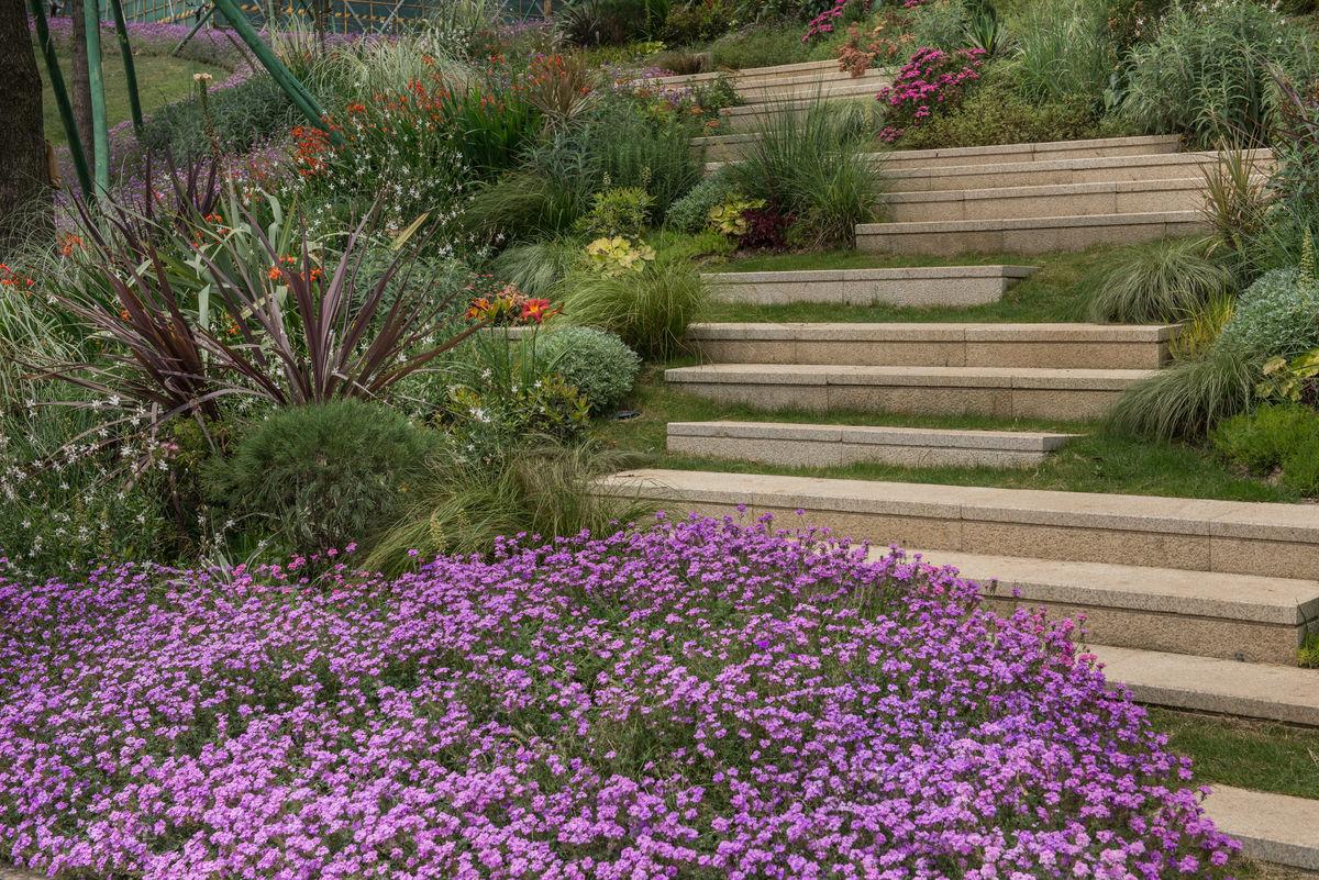 楼盘,台阶,景观设计,小区园林绿化,高档楼盘住宅,花卉种植图片