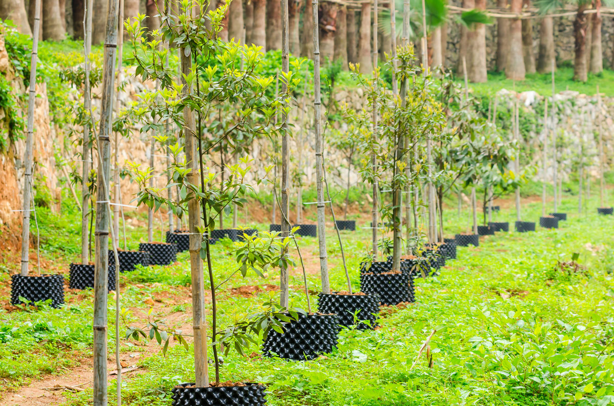 植物园,幼树,手植树,绿树,树木,植物,植树造林,绿化,园林树种,林业图片