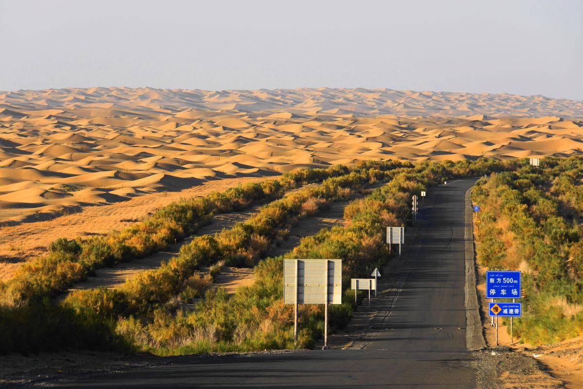 新疆,南疆,沙漠,公路,胡杨,金色阳光