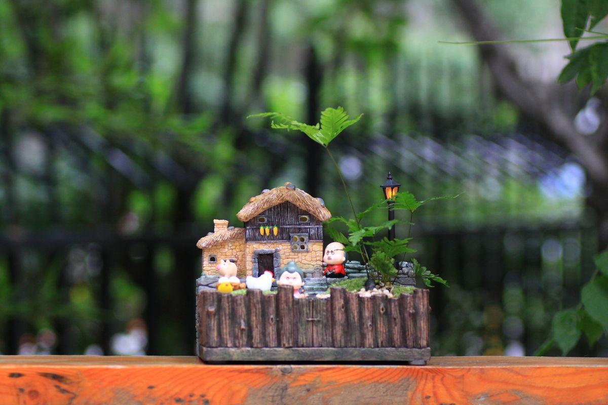 花草,绿植,微景观,苔藓,苔藓盆景,小弥沙,禅意盆景,文竹,田园风微景观图片