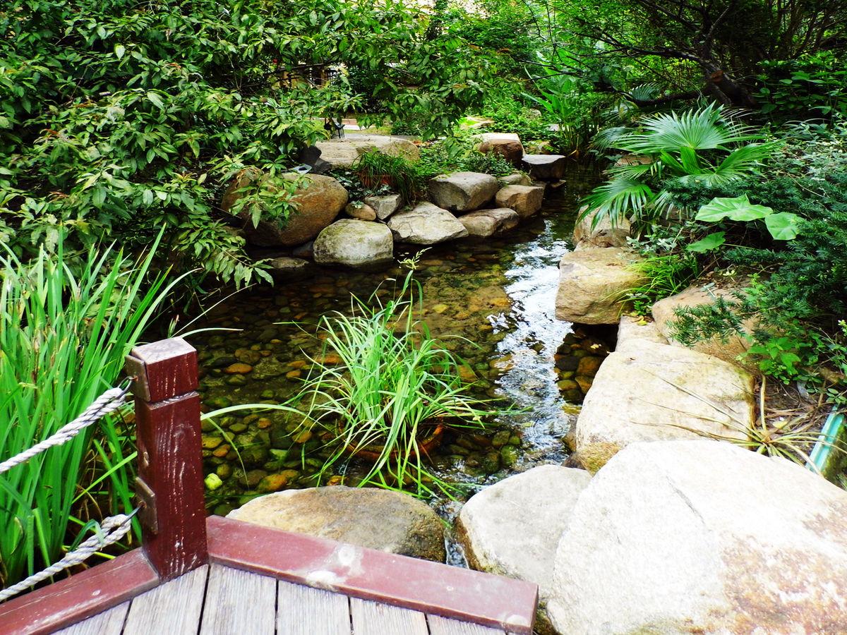 精致别墅花园小水池图片