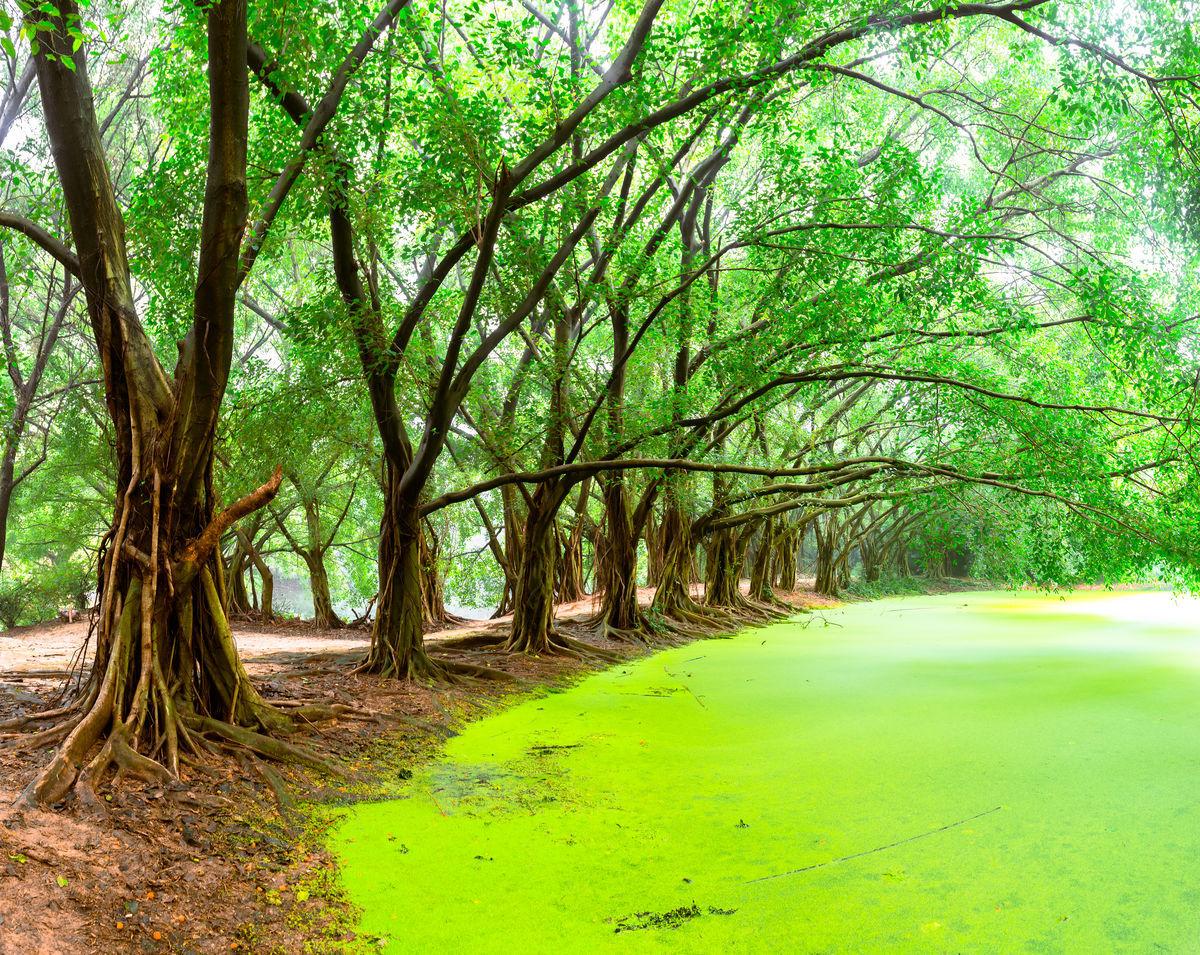 阳光树林,阳光森林,大森林,树林背景,森林背景,树林阳光,森林阳光图片