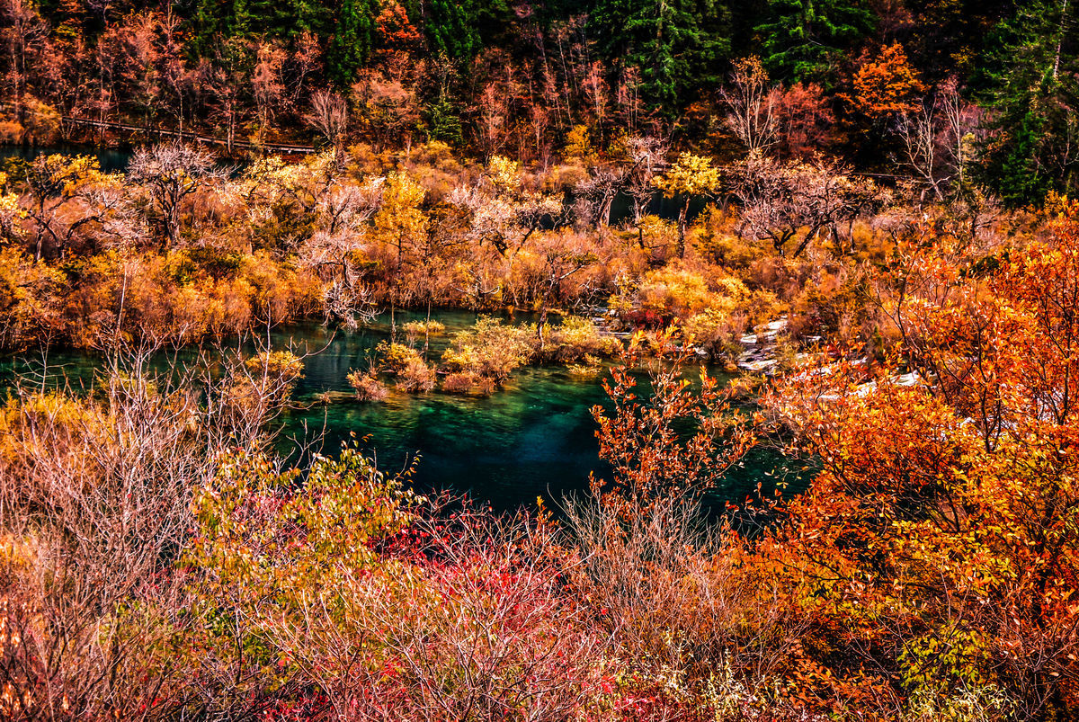 红叶,灿烂,色彩,五光十色,五彩斑斓,风景区,枫树林,秋天,九寨沟图片