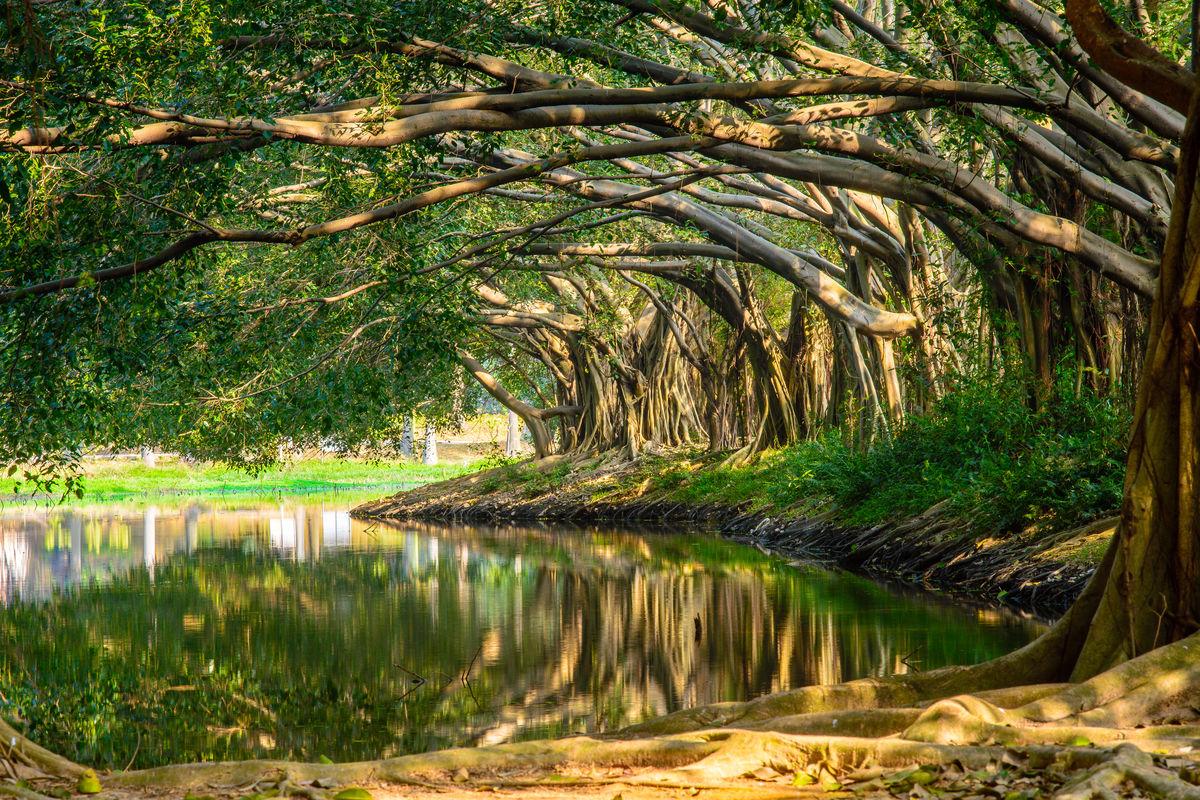 池塘树林倒影,温暖阳光,绿树背景,唯美树林,唯美风景,大榕树,大森林图片