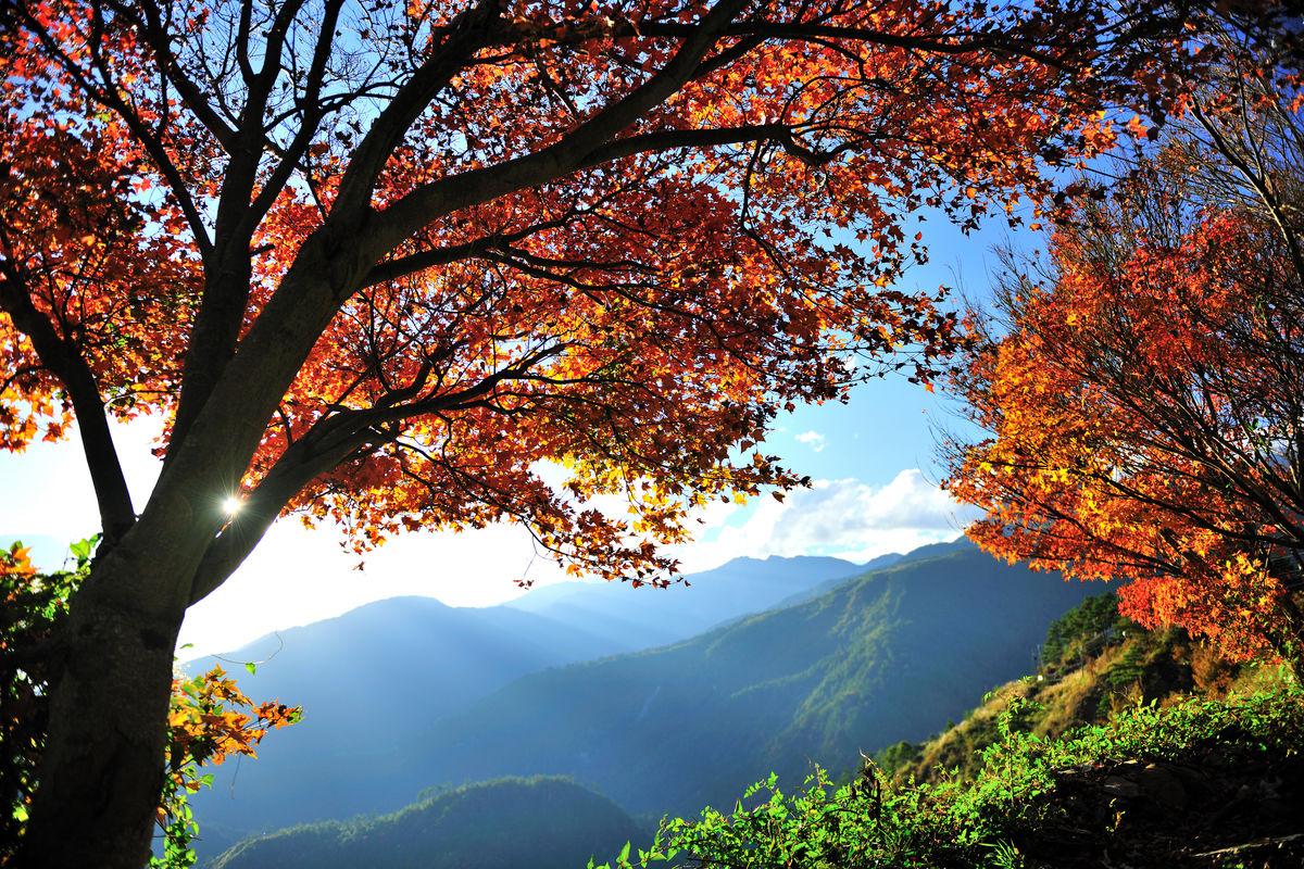 梨山-枫红图片