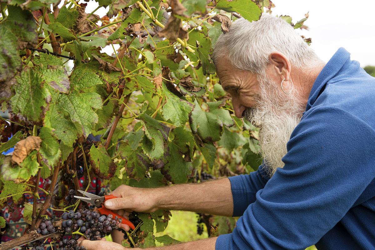 满画幅,户外,欧洲,65到69岁,络腮胡子,小胡子,快乐,白人,农民,法国图片