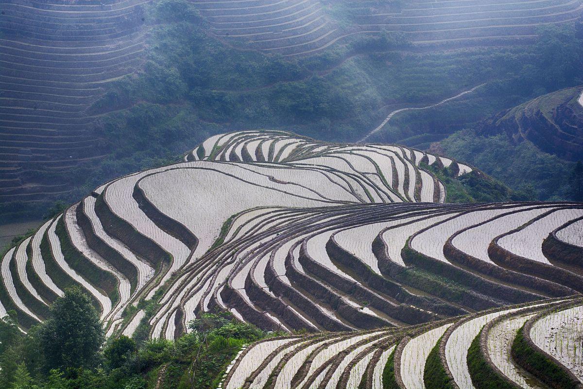 中国�9an:/n�g>K�_水稻梯田,龙胜县,guanxi,中国
