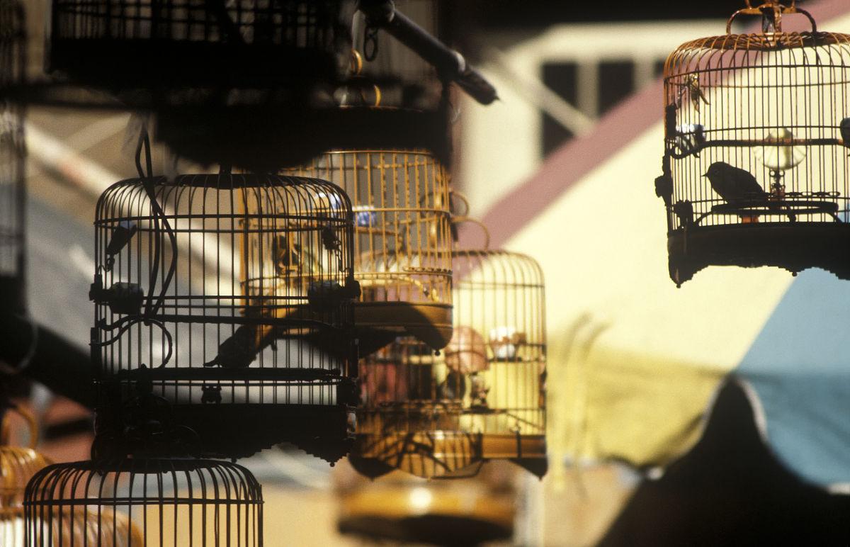 香港喜剧演员表_香港的鸟,鸟市场,笼子里的小鸟,园圃街,园圃街雀鸟花园,九龙,香港