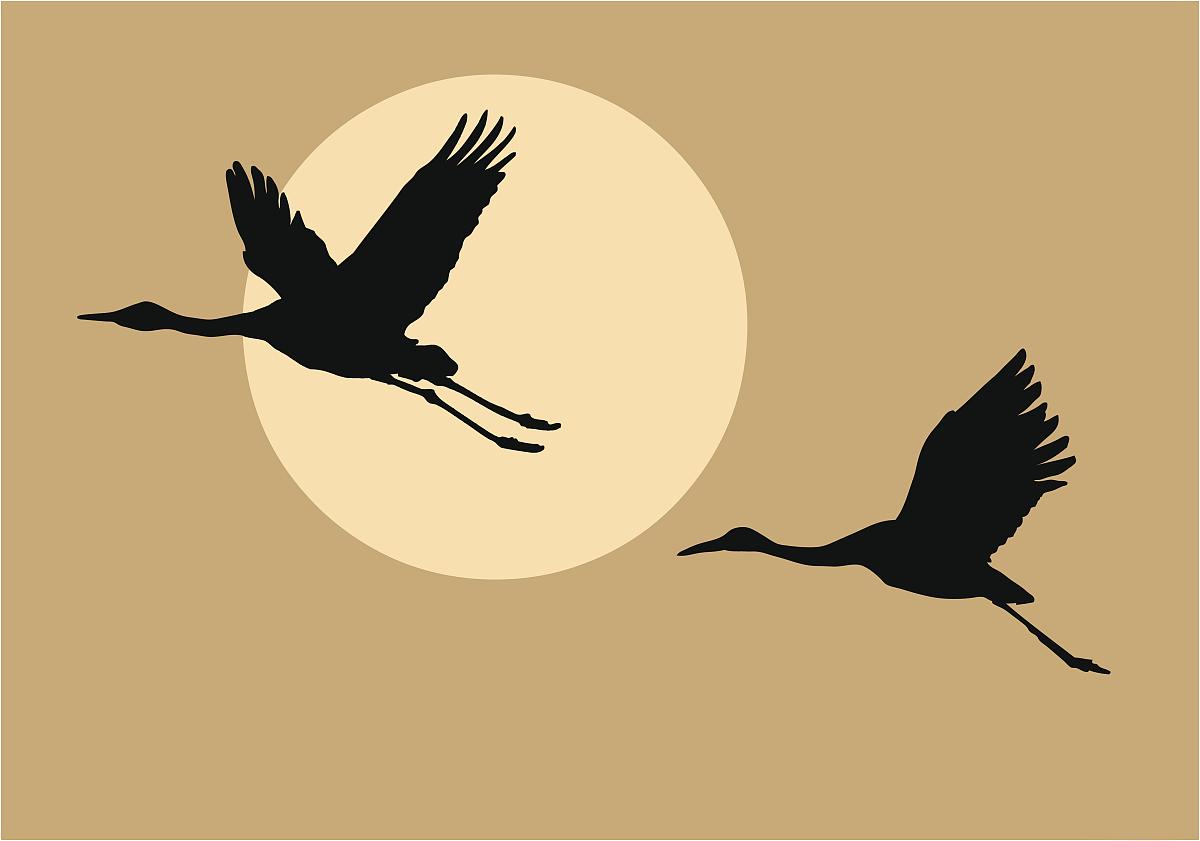 喙,日落,彩色图片,插画,插图画法,生物学,和蔼之人,动物腿,脖子,翅膀图片