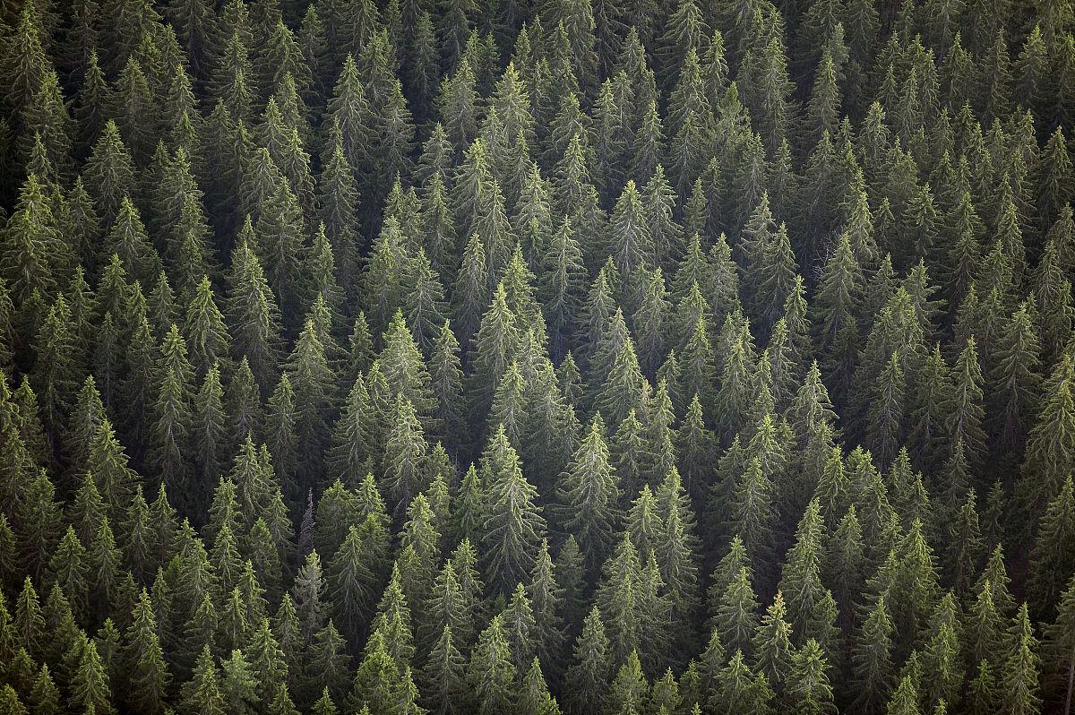 林��h���9���jf��i��i��a_瑞典,varmland,古老的云杉林,满架,鸟瞰