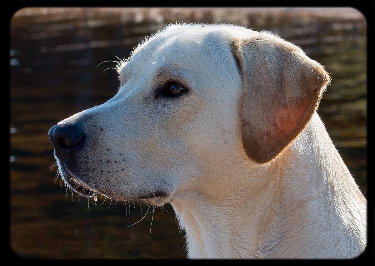 人与动物乱论����y�-yol_动物主题,狗,哺乳纲,一只动物,家畜,动物躯体的组成部分,无人,动物头