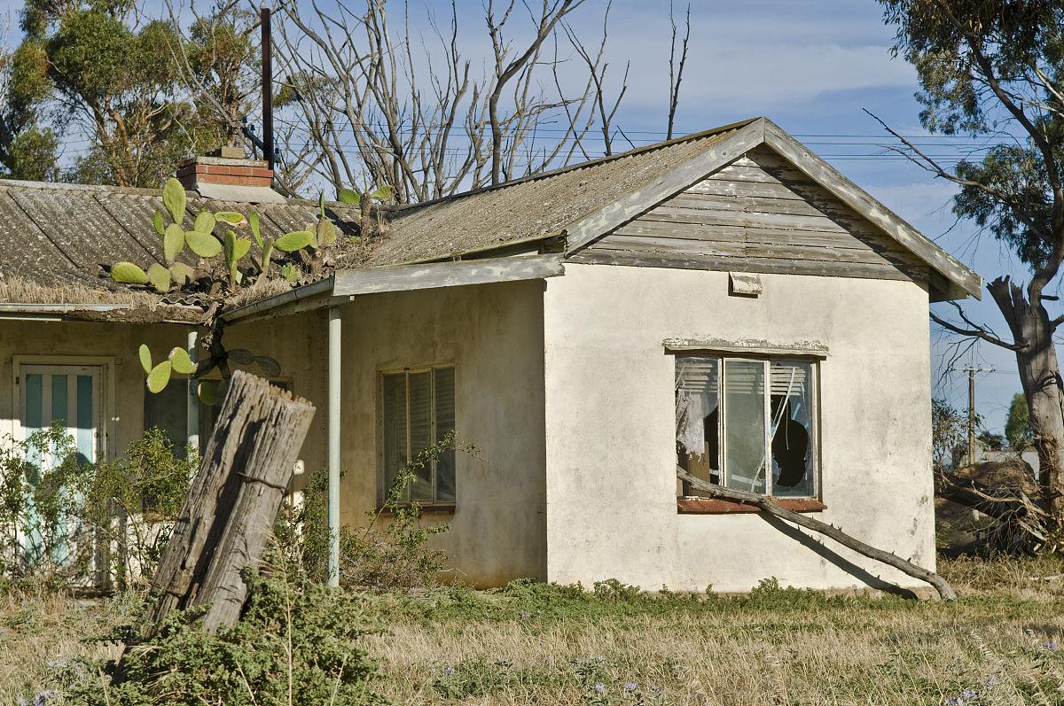 屋顶上生长仙人掌的废弃房屋图片
