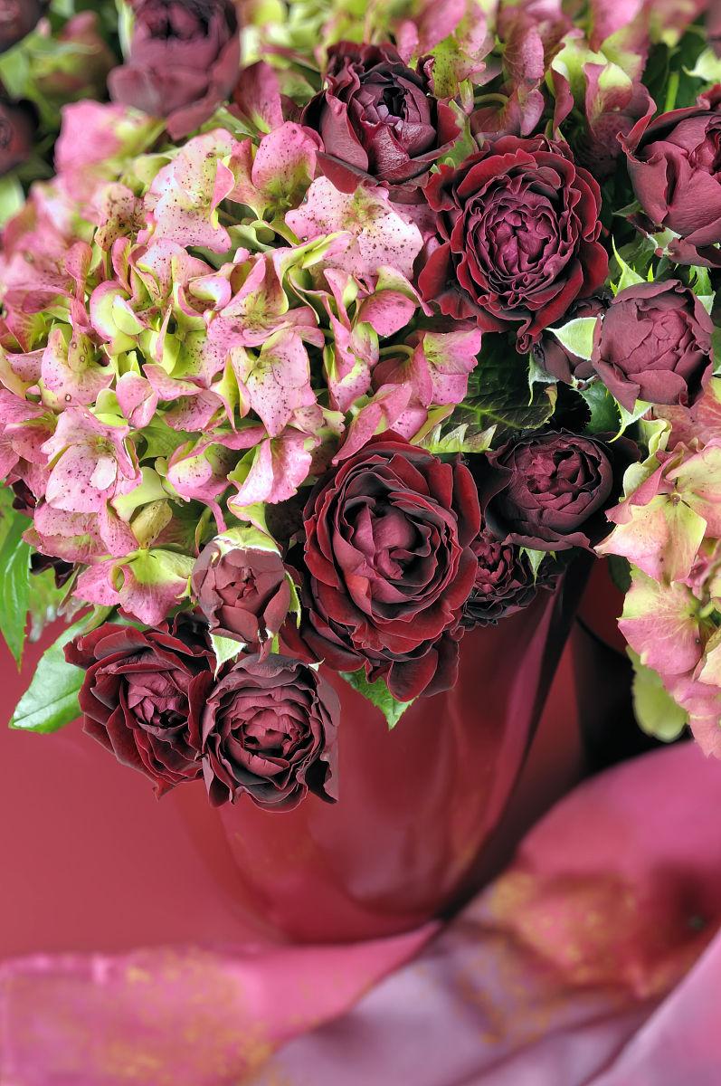 深宫风云之玫瑰_深红色的玫瑰(罗萨)和粉红色的拖把头的绣球花(八仙花)红色花瓶
