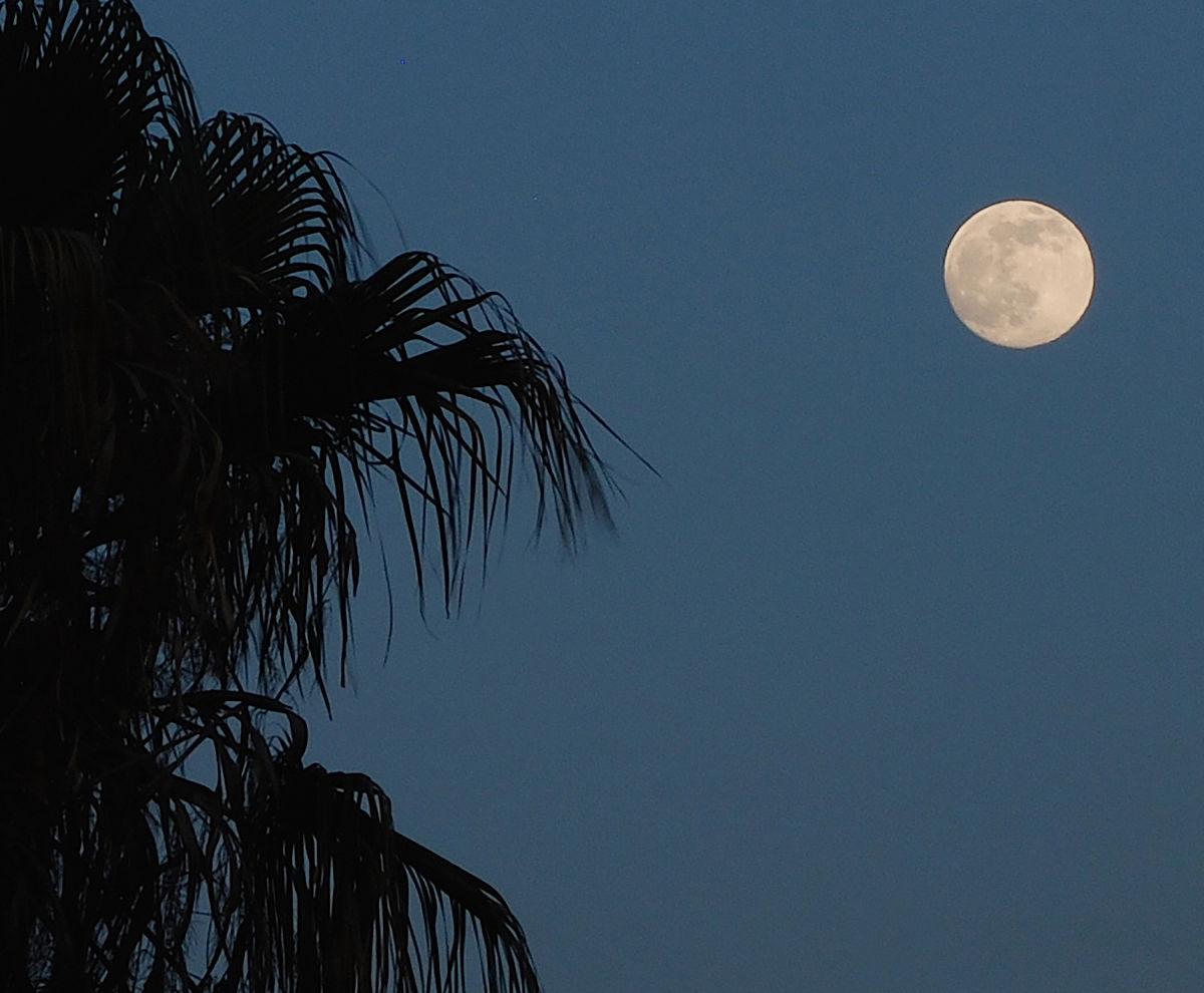 蓝色月光侦探礹.+y��_柔和的月光