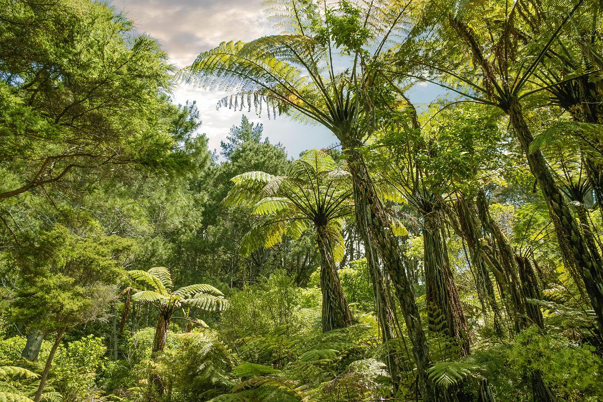 热带森林图片
