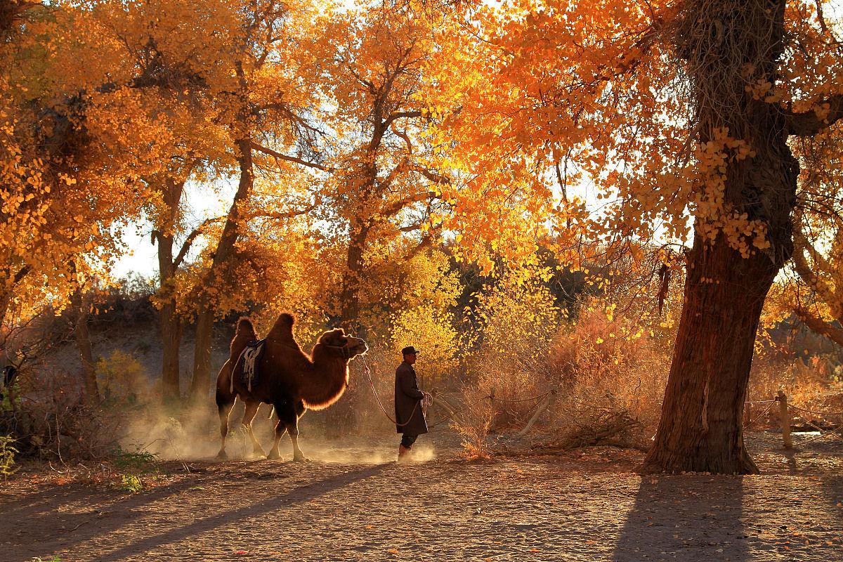 中国内蒙古胡杨林图片