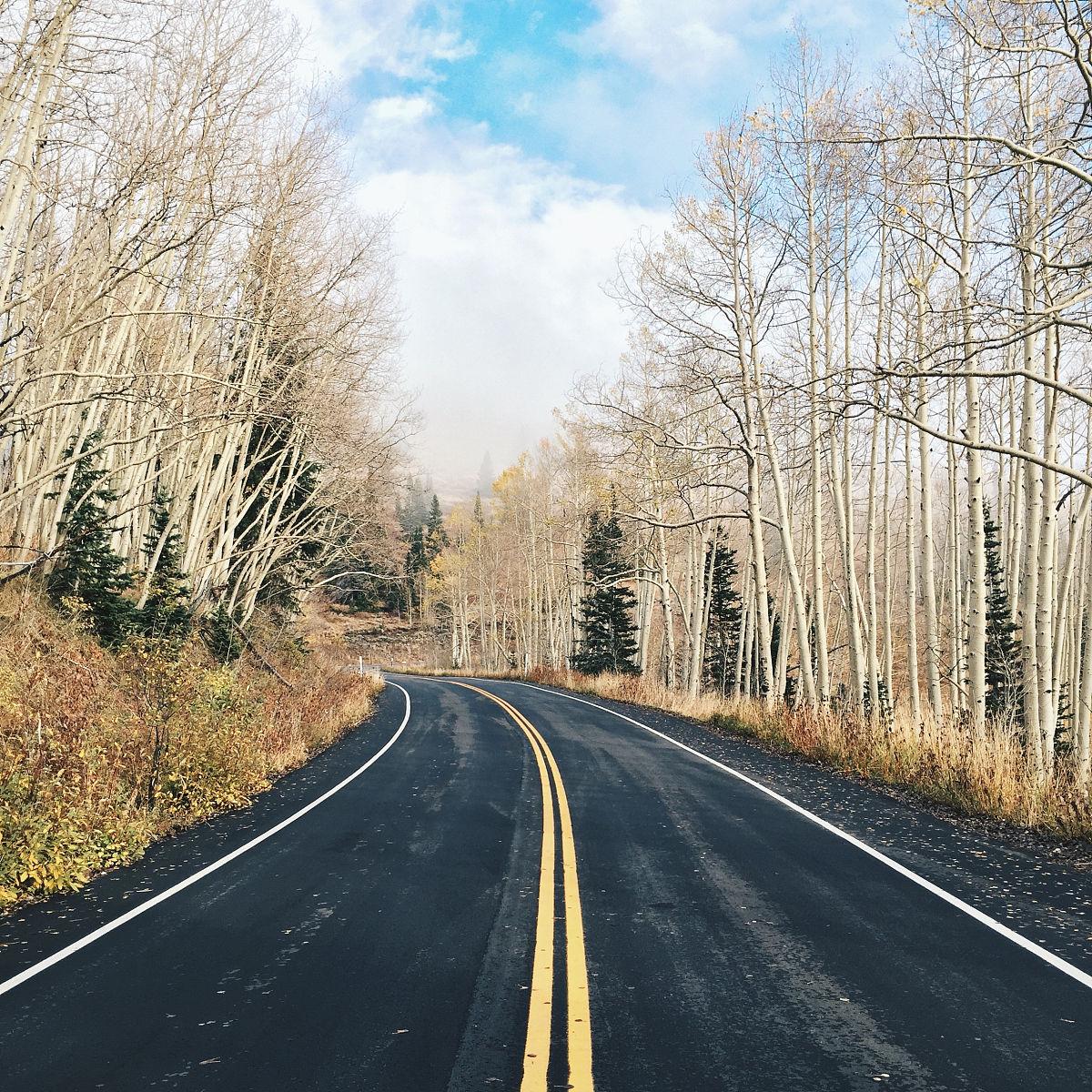 路�_裸树乡间路