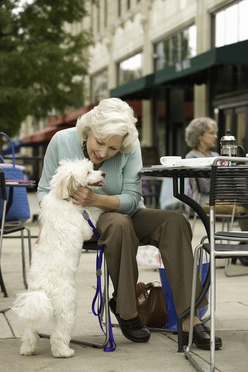 高级宠物狗的女人在咖啡馆图片