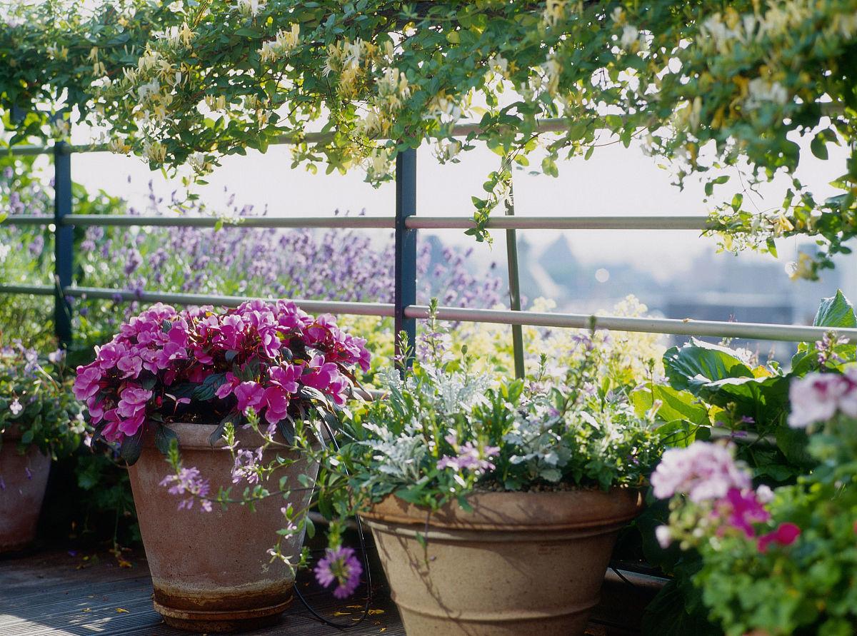 从安特卫普的阳台花园看盆栽花卉图片