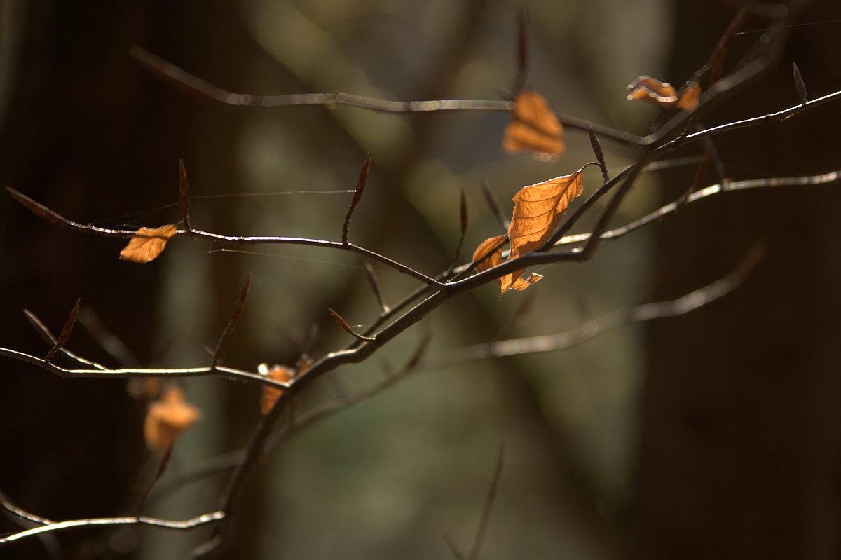 之间_树木之间