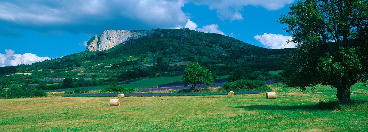 �~��M�_树在一个领域,mevouillon,普罗旺斯-阿尔卑斯,法国