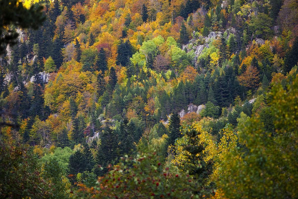 比利牛斯山的秋天森林.图片