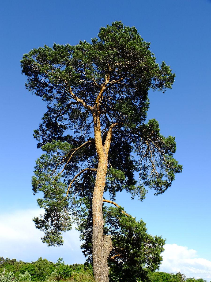 义马市招聘�y�k��d_低角度看树对蓝天