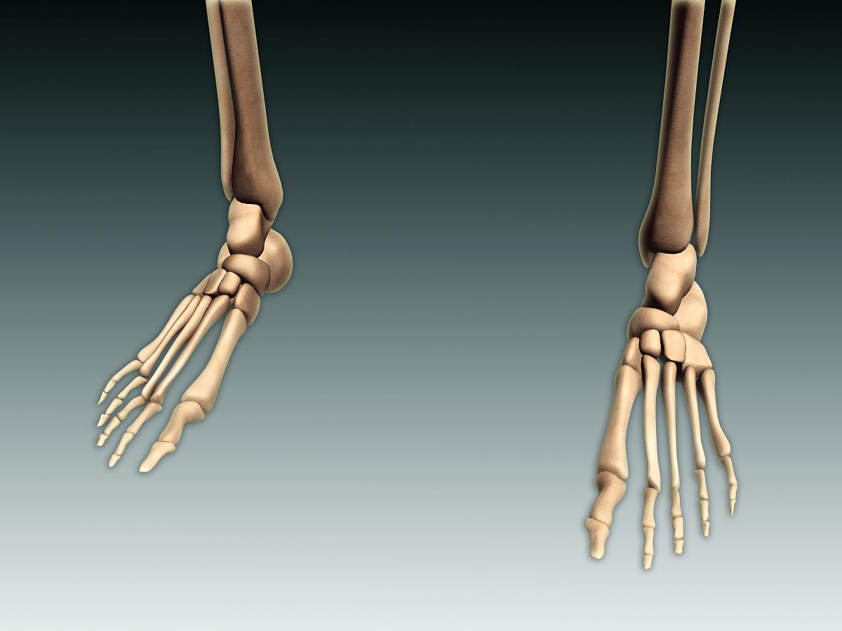 腰部骨骼固)�_生物学,人体解剖学,健康保健,易接近性,腰部以下,骨头,站,胫骨,腓骨