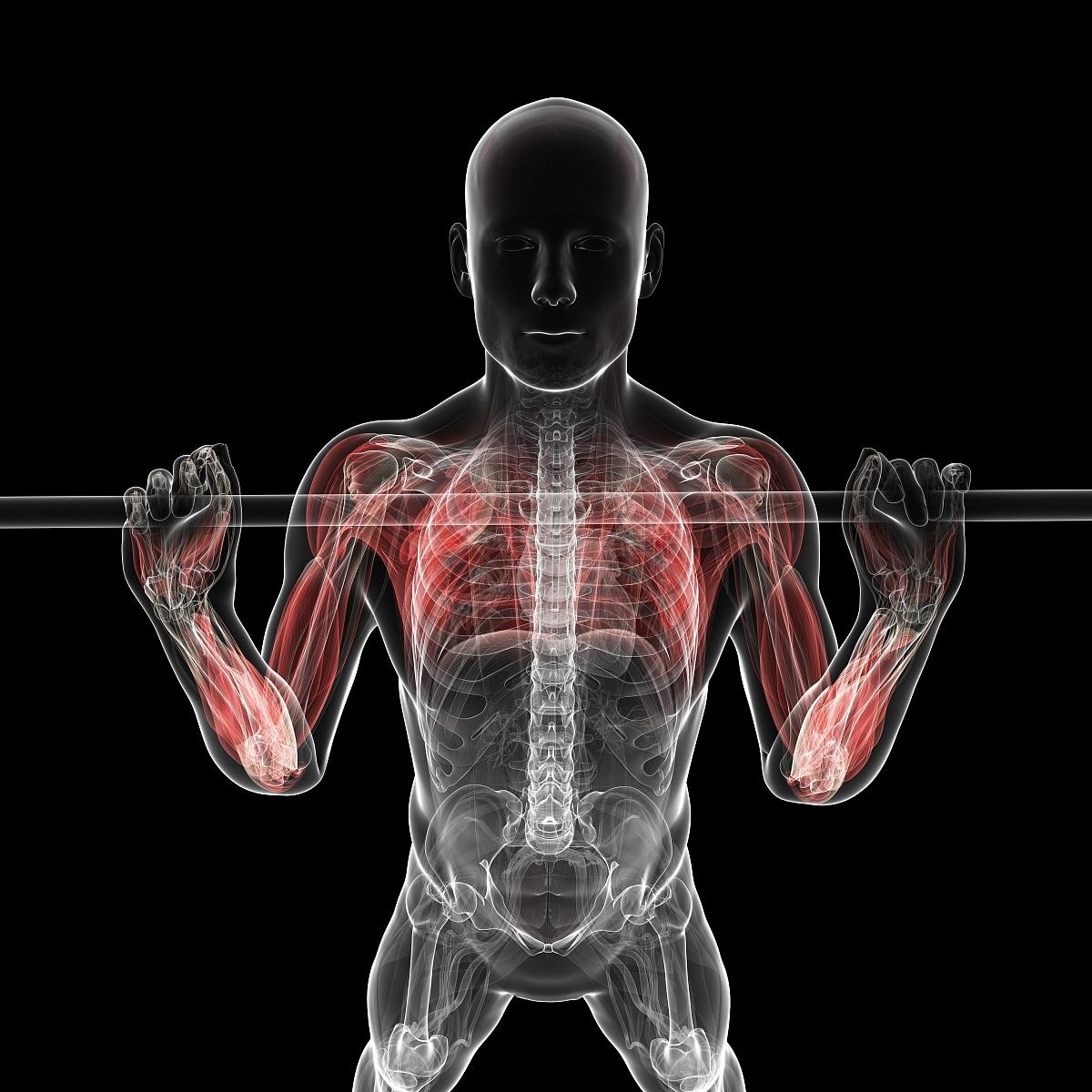 肌肉_健康保健,运动,水平画幅,正面视角,计算机制图,负重物,躯干,人类肌肉