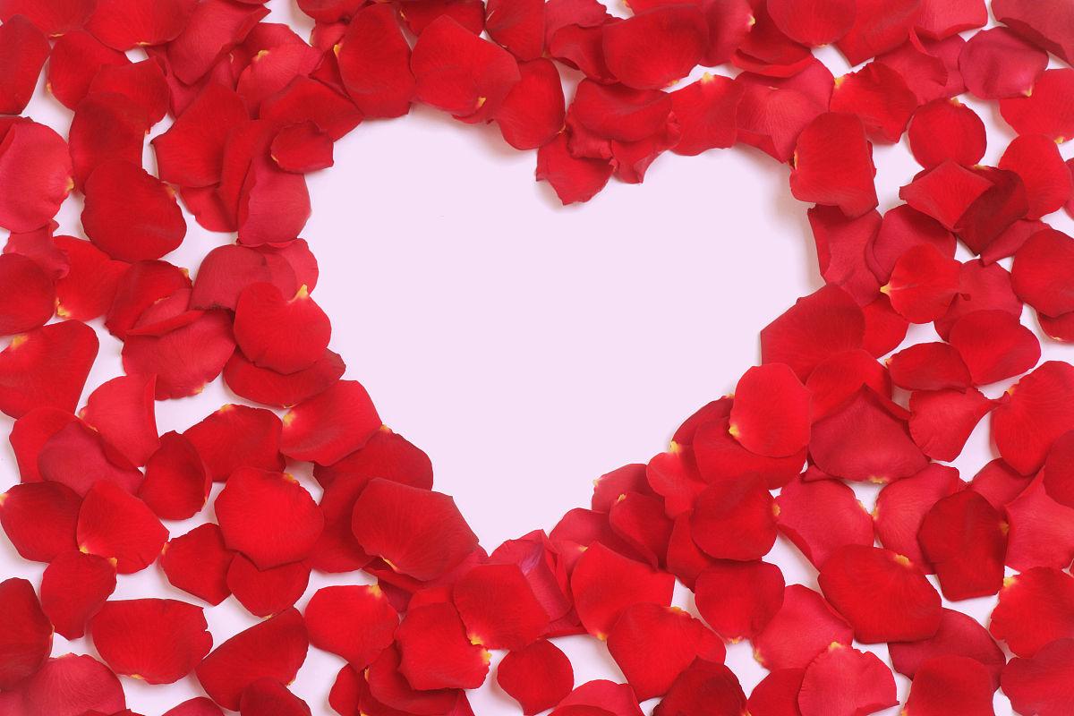 心形玫瑰花瓣,特写图片