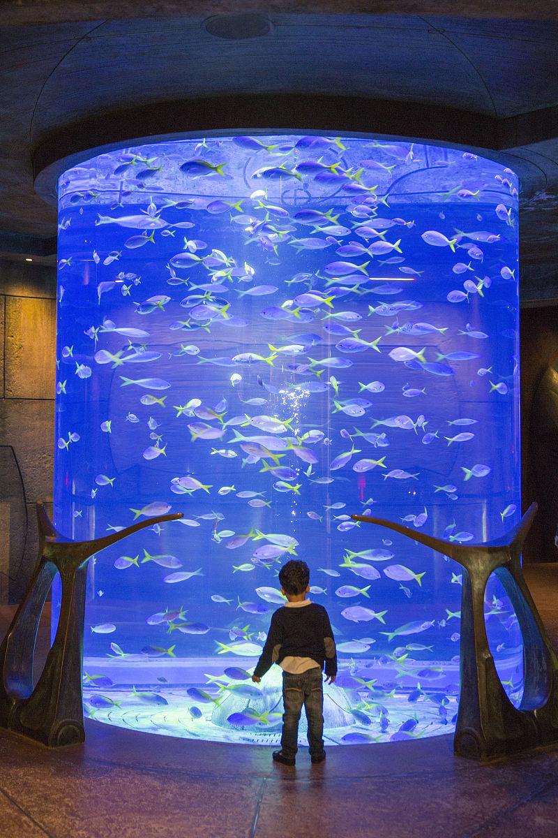 迪拜,亚特兰蒂斯的水族馆酒店图片