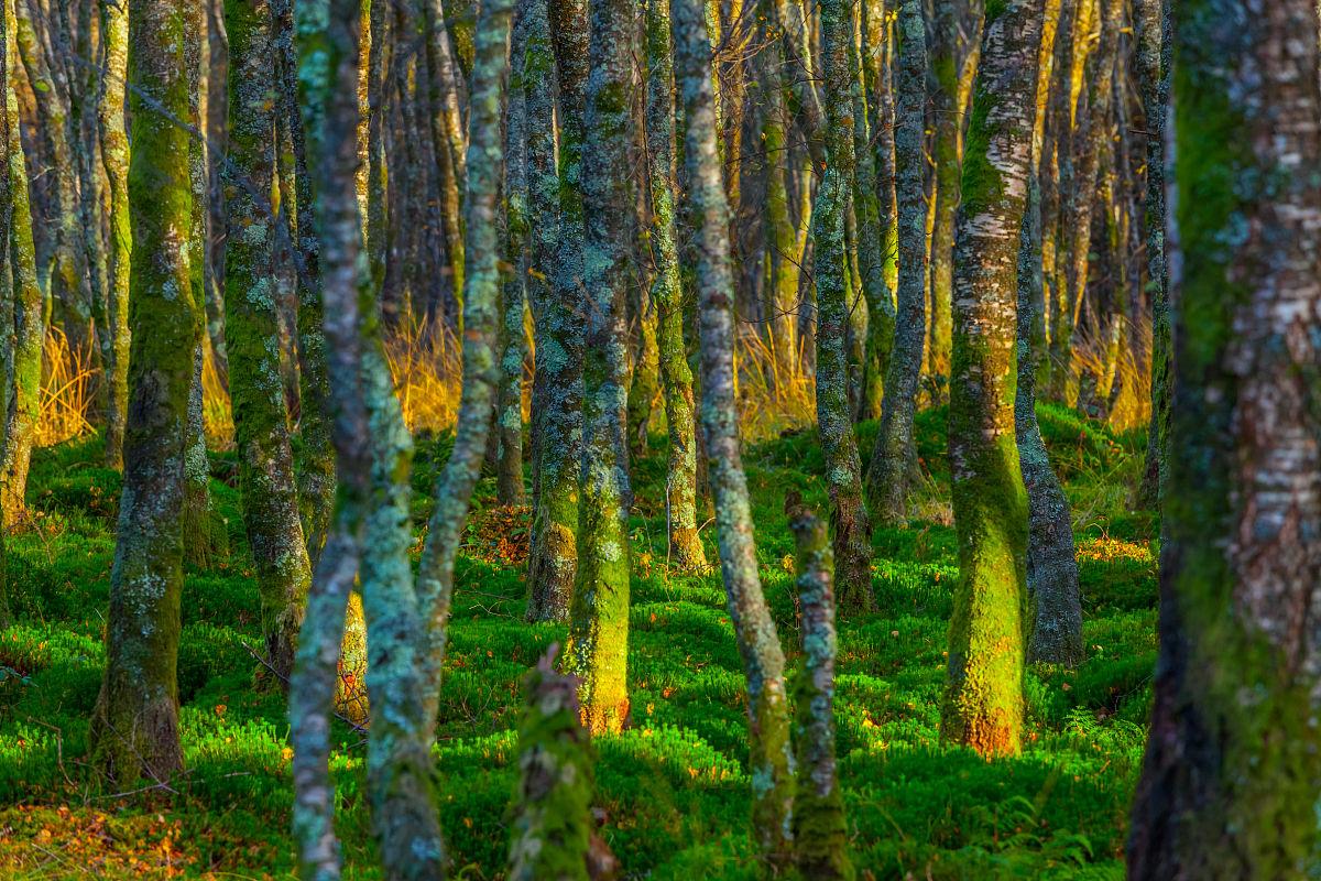 林��h���9���jf��i��i��a_在glendalough,威克洛郡苔藓林,爱尔兰