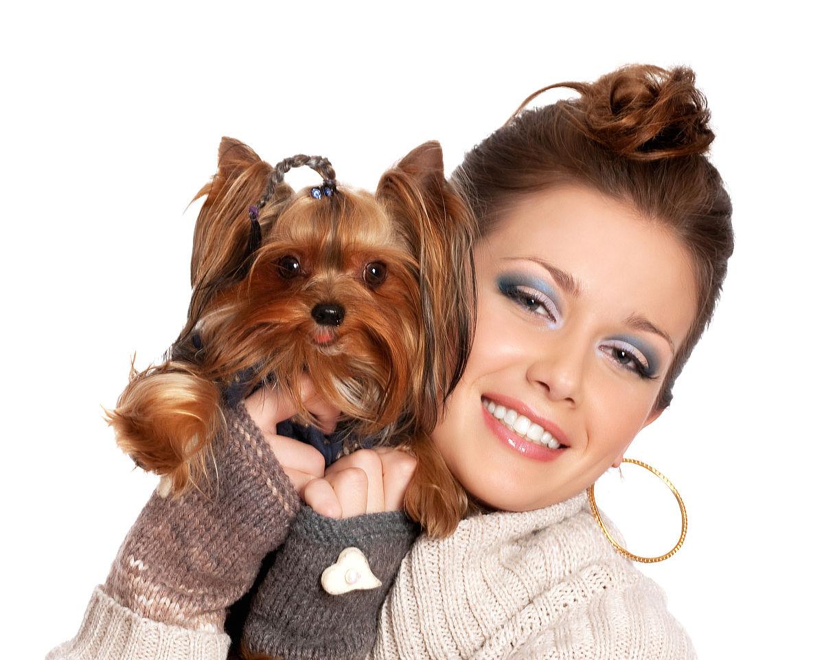 爱的,发型,棕色头发,动物,笑,微笑,拿着,嬉戏的,哺乳纲,褐色,白色,狗图片