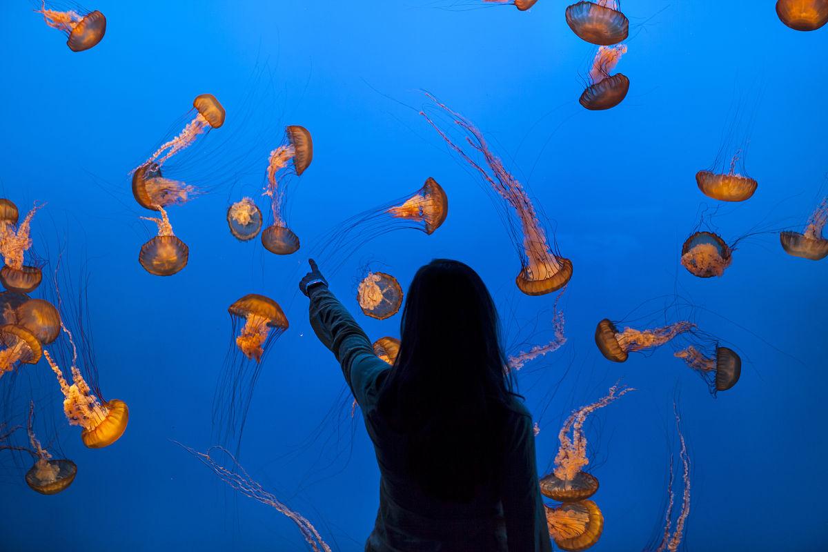 女人在水族馆观赏水下的海洋生物和鱼