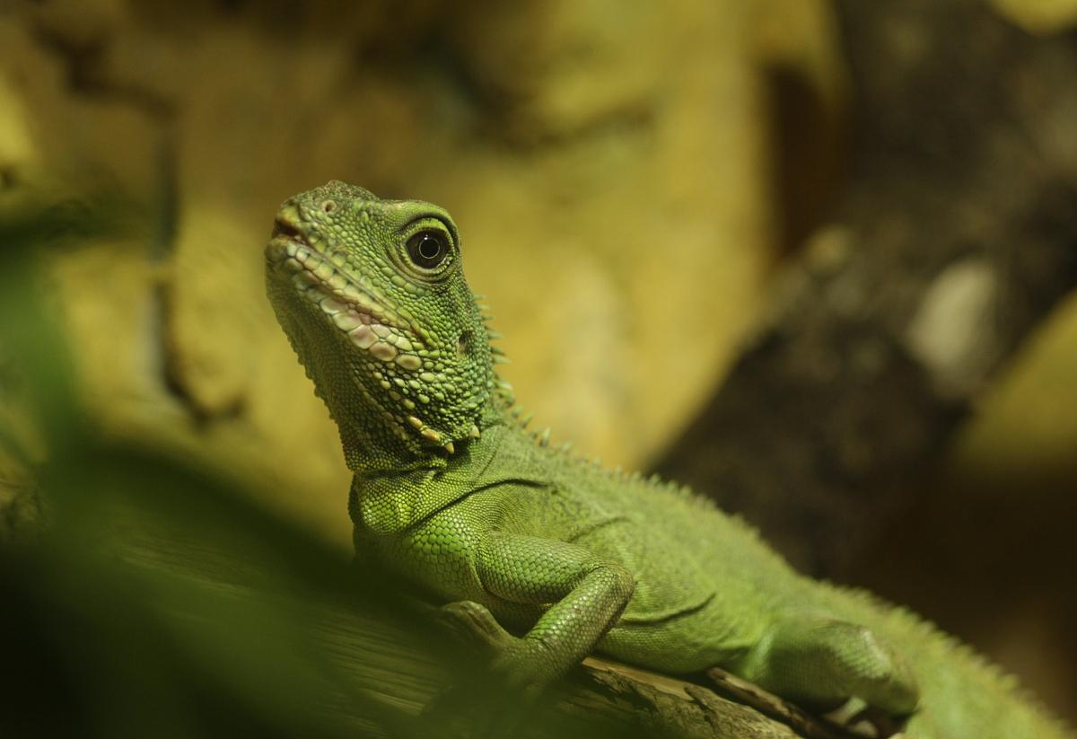 ���,\\z(j9��yc!_绿色的小动物/ mazais za鍕焌是abinieks