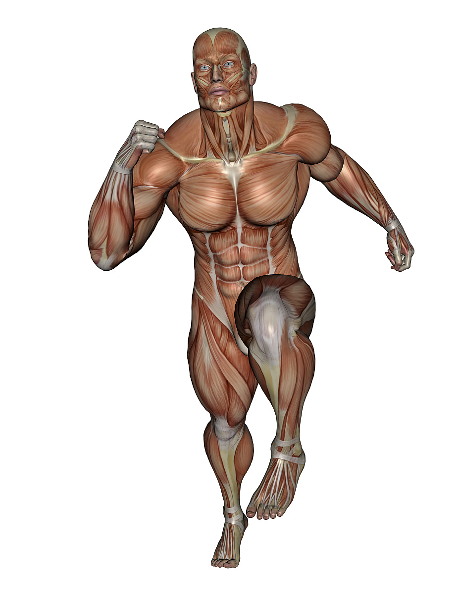 肌肉_肌肉男跑步,白色背景下孤立.
