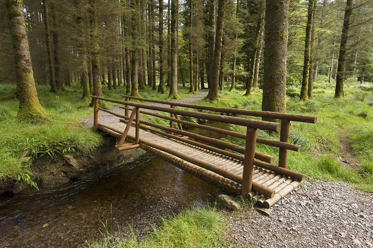 在森林公园gougane巴拉小木头桥.图片