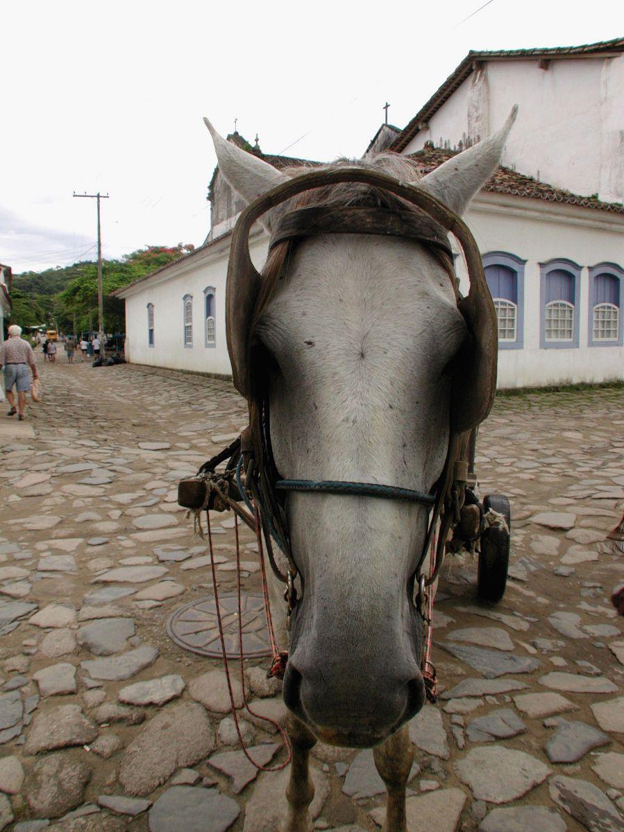 负荷的驴子,rj,帕拉蒂,巴西图片