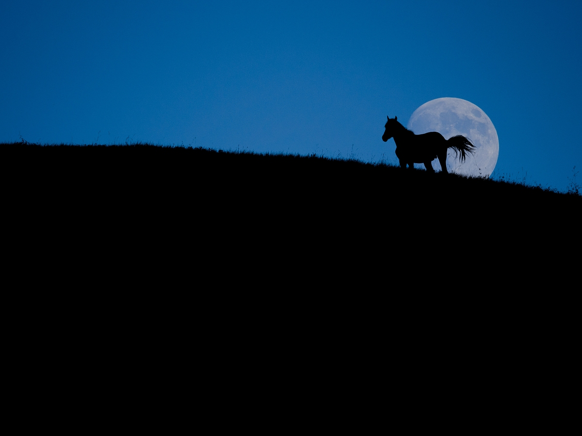 蓝色月光侦探礹.+y��_月光下的马