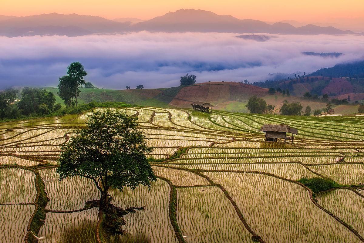 gmai_水稻梯田梅酱村,chaingmai省,泰国