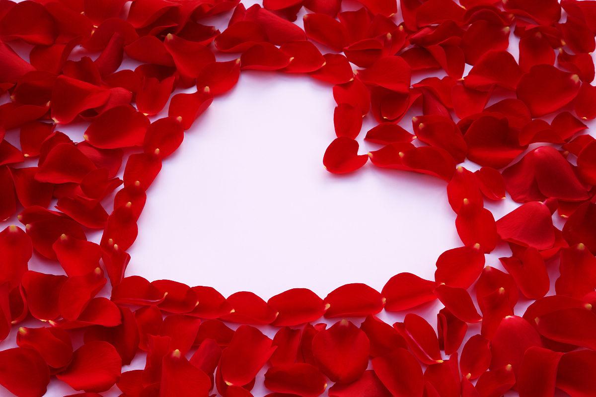 红玫瑰花瓣,心形白色.图片