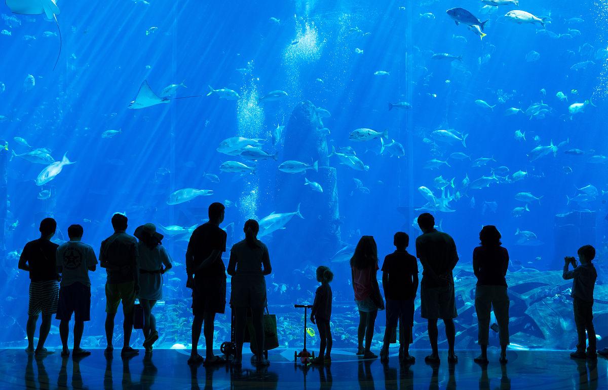 亚特兰蒂斯:失落的帝国水族馆棕榈岛图片