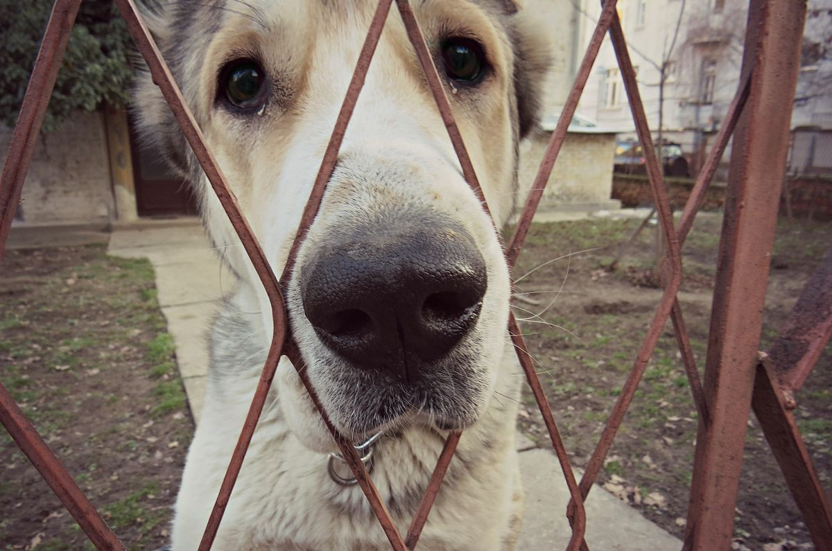 可怜的狗图片