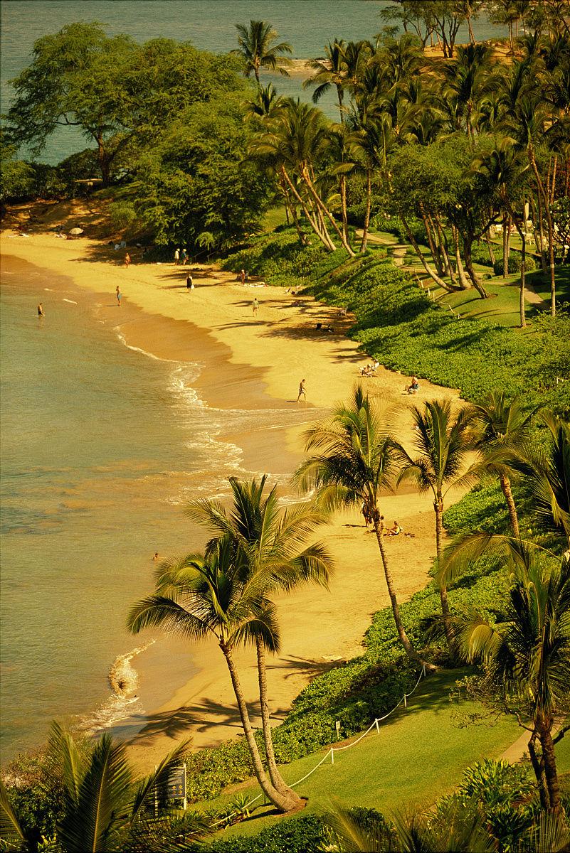 �Nw�Mw�}�����_毛伊岛wailua概述尺海滩w /手掌沿着海岸线下午d1501