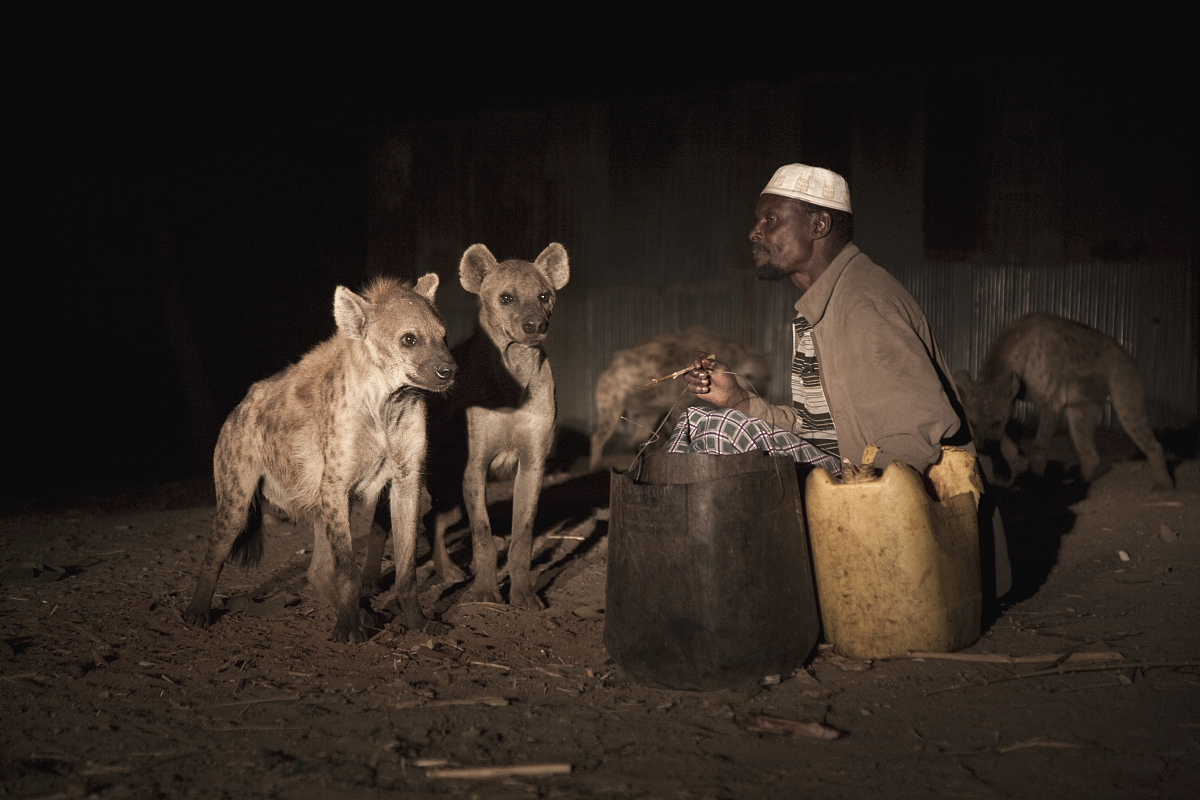 mulugeta wolde mariam,harar人吃生肉的野生鬣狗鬣狗.