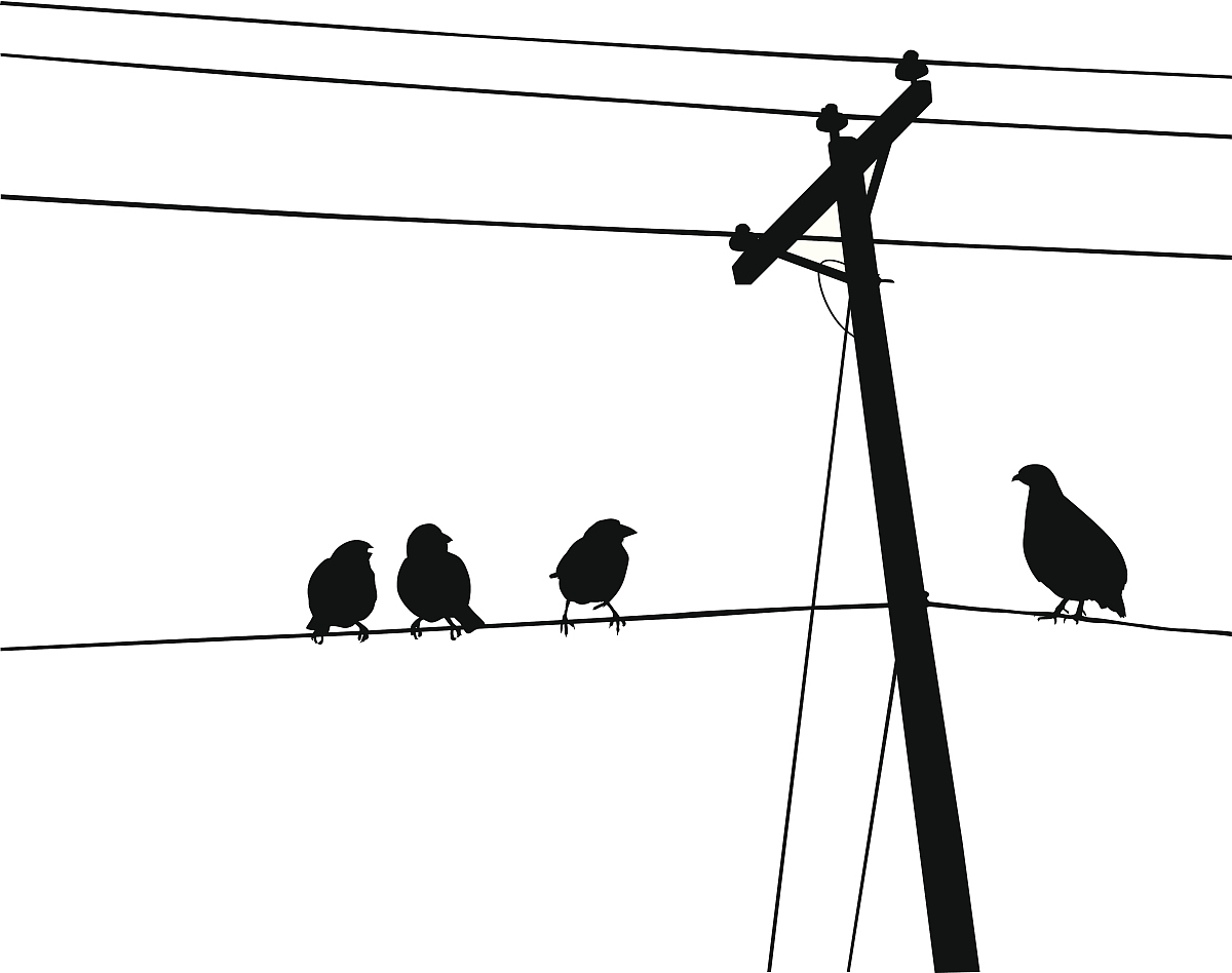 轮廓,阴影对焦,成一排,电话线,电线杆,鸽子肉,动物,数码图形,鸟类,无图片