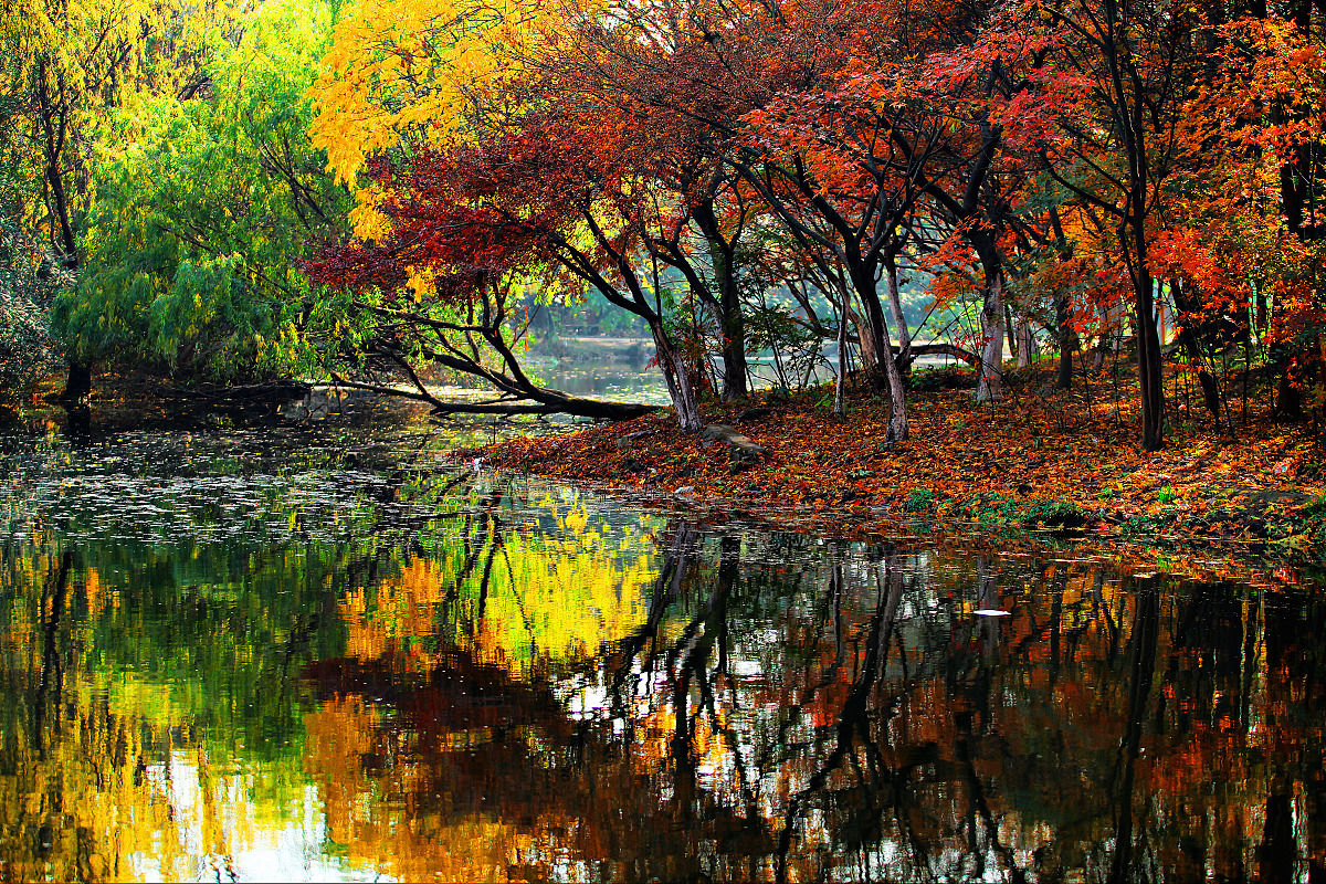 深秋的上海共青森林公园图片