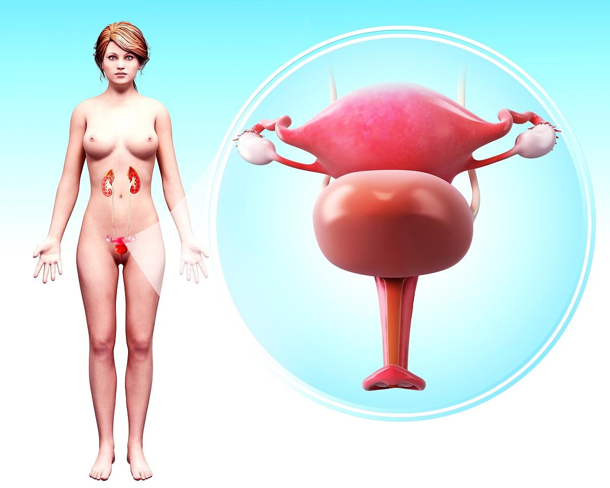 女裸体阴门艺术_女性生殖系统,电脑艺术品.